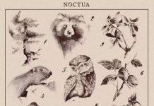 Piccolo Digitale Mondo Antico - Noctua